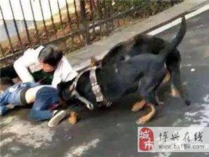 路遇恶犬怎么办?学习一下如何自救和救人很有必要!