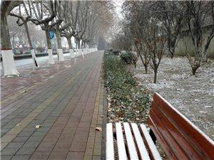 邹城今冬的第一场雪正在下、、、