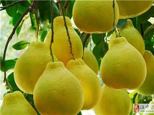 染色、抗癌?关于柚子的四个真相