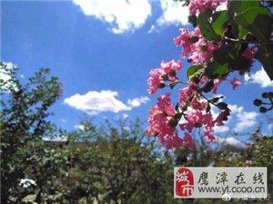 余江灵溪小镇获评江西省4A级乡村旅游点,真是美!