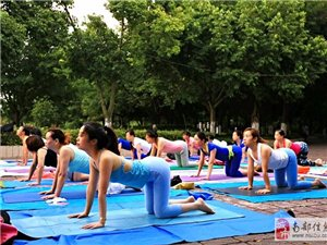 天羽瑜伽体式精讲公开课