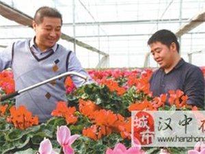 汉中南花北种助增收