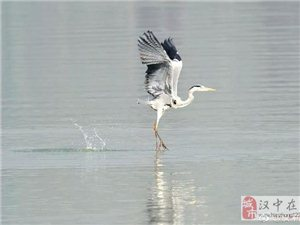 在大汉中的江边这些鸟儿你都见过么?