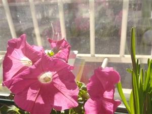今天阳光特别好,看看我养的花都开了~