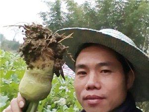 【农活】看看我们兴文农村人的生活,其实过得非常充实!