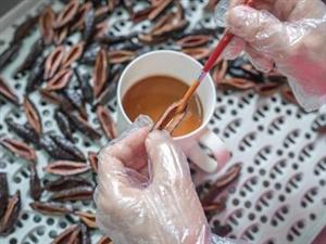 世界卫生组织权威认证:槟榔与致癌没有直接关系,并没有引起致癌的风险