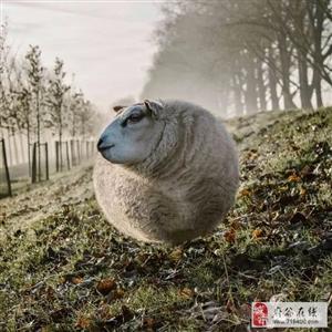 假如动物们的身体都变成了气球状态,有点莫名其妙的搞笑