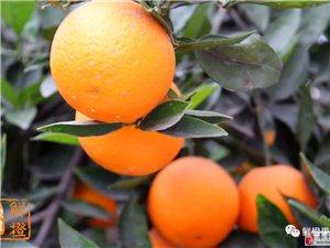国外权威专家研究结果:不吃水果,是会死人的