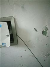 老城区19号楼移动光纤早上被恶意剪断,谁干的?