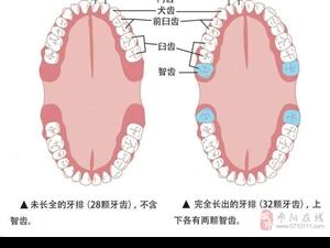 智齿为什么一般在16岁以后才萌发?