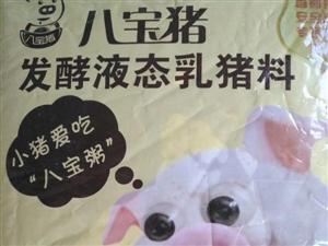 八宝猪发酵液态乳猪料――――小猪儿最爱吃的八宝粥,你用了吗(图片)