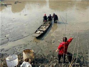 虹星桥鲤鱼大丰收,每条足有二十多斤