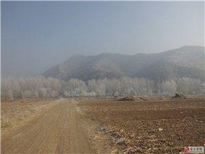 雾凇锁小村