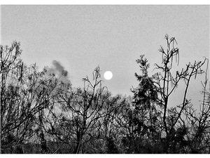 隆冬晨曦枯枝寒,月儿西垂挂天边,囱烟如龙飘飞过,时光匆匆又一年。