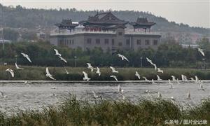 近千只国家二级保护动物白琵鹭飞抵襄汾滨河公园