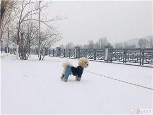 吕梁:2018年的第一场雪如约而至(图)
