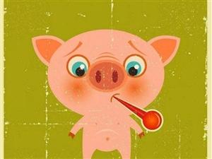 元旦过后,买年货去哪里?来这里送你一头猪!