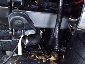 """汽车的发动机舱便成了老鼠的""""储物仓"""""""