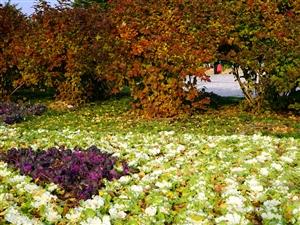 白菜花也很美!