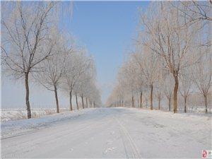 邹鲁农业公园雪景随拍
