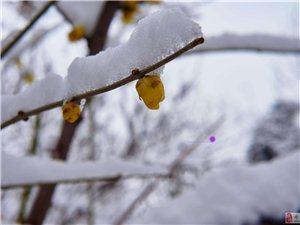 2018~雪景~~~~~~~~~~~~~~~~