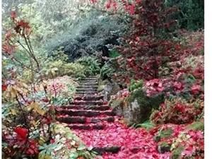 红叶落尽心为谁