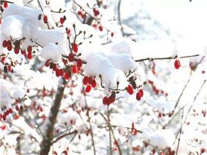 """-9℃!栾川新一轮的降雪在路上!中央气象台:""""一定会下到你们满意!"""""""