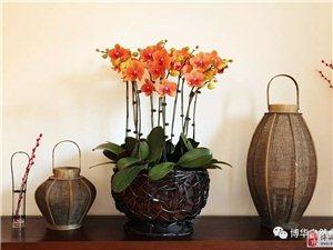 家中必备鲜花~太美了~
