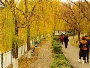 冬天,广汉金雁湖公园的景色