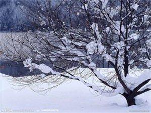 七 绝・ 盼雪