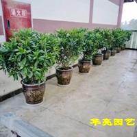 室外摆放绿植-广汉市华亮园艺种植场合作伙伴场地实景拍摄(图片)