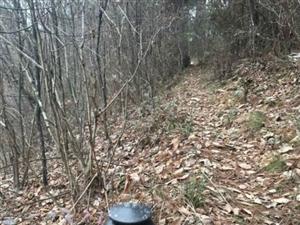 汉中宁强:有人在山林中非法安装有电网