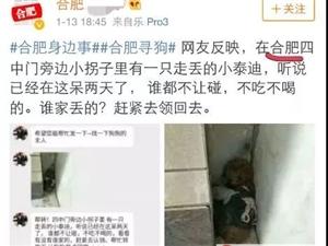 临泉人找了一天的泰迪,居然跑到了合肥、淮北、宿州、淮南、徐州、苏州、成