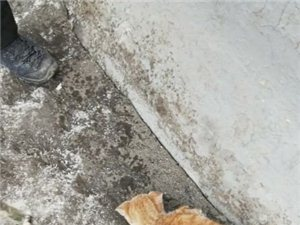 澳门大小点网址师徒徒步西藏第二十九天!遇到一只冻成标本的猫!