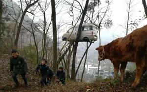 实拍:镇雄一辆面包车竟上了树!到底是要闹哪样?