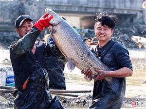 长兴和平农村打年鱼迎新年