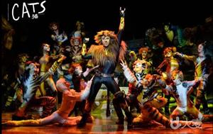 南京市文化消费政府补贴剧目:世界经典原版音乐剧《猫》 Cat