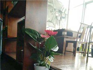广汉市华亮园艺种植场推荐适合室内摆放的高档绿植-红章(图片))