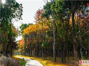 上海九科绿洲公园
