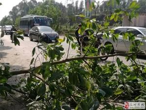 化州丽岗路段小车撞入树丛 路人自发设置路障 维持交通秩序