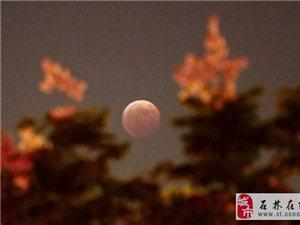 今晚,约起看红月亮