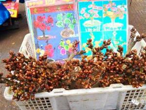 潮汕如果有人在卖这些花,千万别再被坑了!