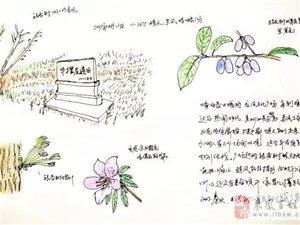 自然笔记01:寻花问草,无意间,发现一个商周遗址!