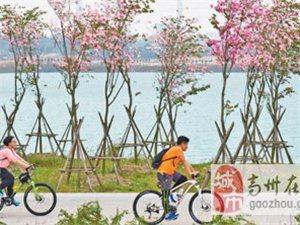 """广东茂名""""城市伤疤""""变身生态公园(人民眼・生态修复)"""