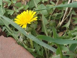 春    芽
