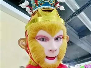 """猴精,澳博国际娱乐""""美猴王""""许晓东亮相央视14分钟,是个""""小猴""""!"""