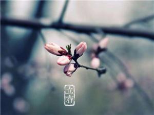 立春:阳气和暖又谋耕
