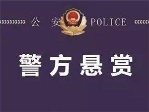 临泉籍50名在逃人员悬赏通告