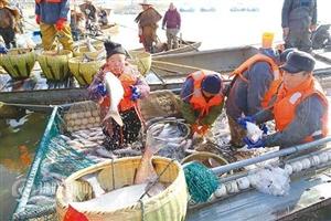 鱼儿捕上岸 欢乐迎新年