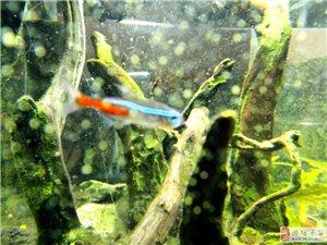 玻璃钢里养鱼鱼 前景光明出路不大